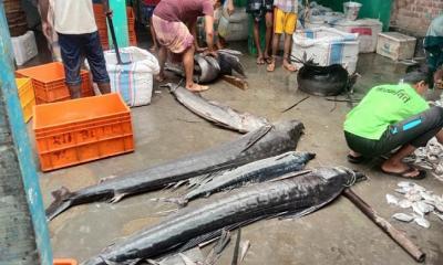 সাগরে মিলল বিশাল ৮টি পাখি মাছ